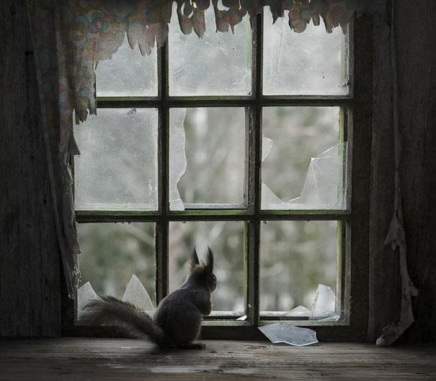 abandoned-house-animals-kai-fagerstrom-5